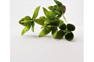 Lilly Flower sec  - vert clair