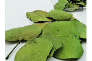 Dried Moneta leaves - light green