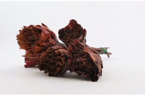 Dried repens protea cut flower red