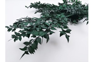 Dried Italian ruscus dark green