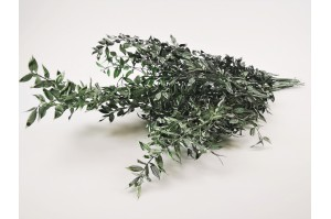 Dried ruscus milky green