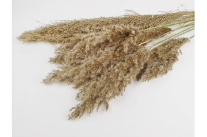 Dried Plumeau (grass) from Provence nature