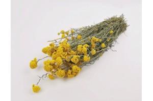 Dried Sanfori yellow (NL)