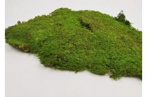 Preserved rock flat moss  light green