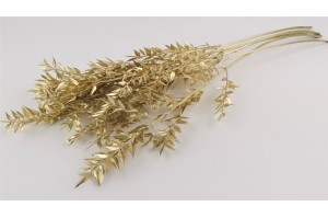 Dried ruscus gold (IT)
