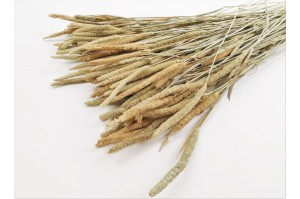 Dried phleum nature (IT)