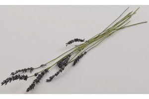 Dried lavendin natural (IT)