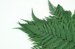 Preserved Brillant fern green
