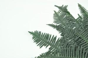 Fougère double stabilisée verte