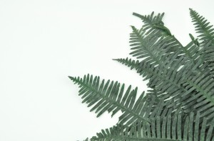 Preserved Double fern green