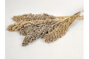 Dried sorghum Italian Natural