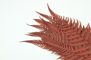 Preserved Parchment fern red