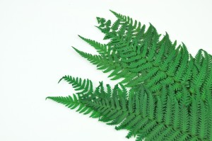 Preserved Parchment fern green