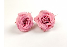 Preserved Rose heads XS (2-2.5 cm) pink