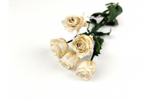 Preserved spray rose 5 heads XS (2-3 cm) white