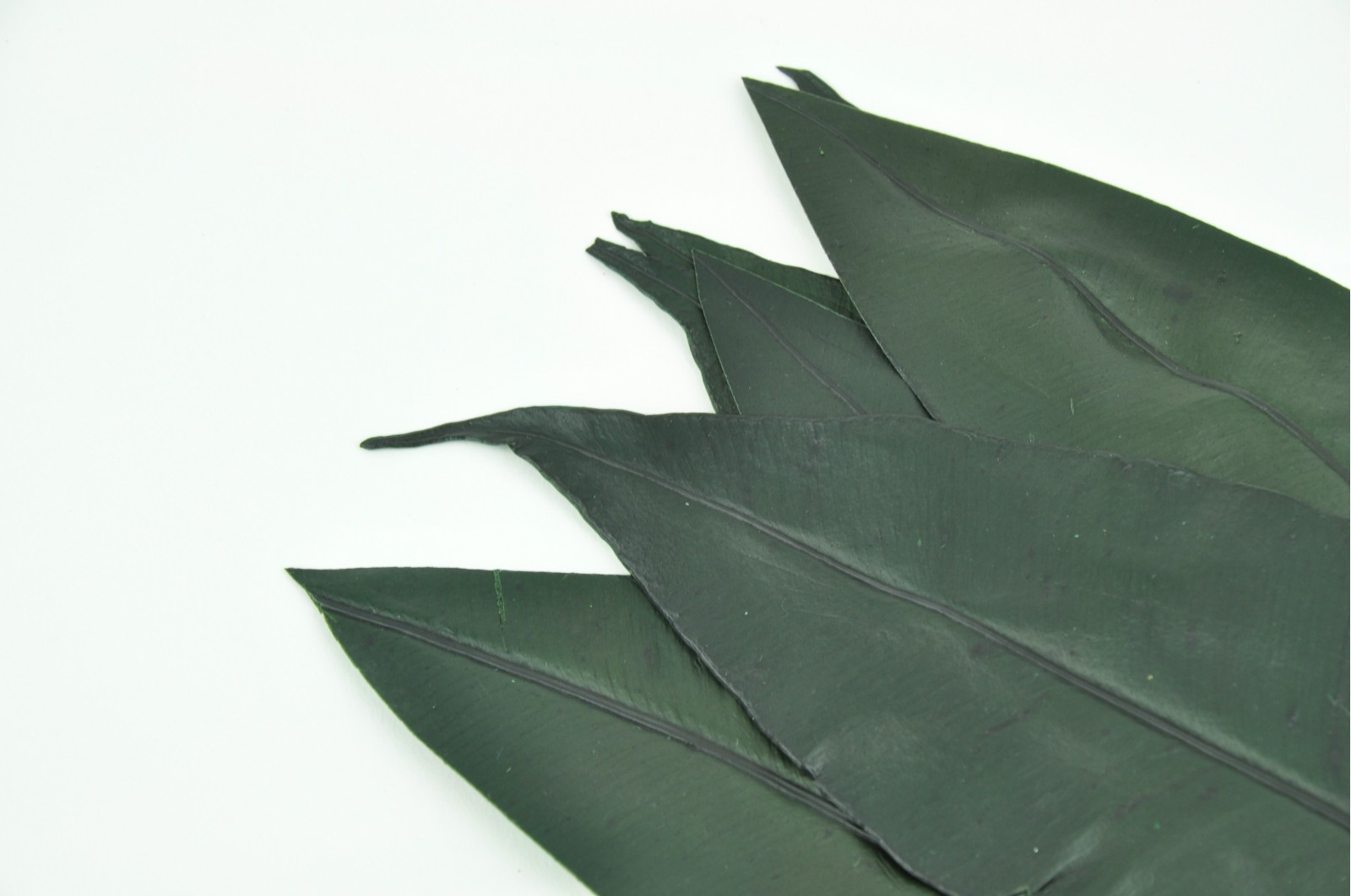 Preserved Tropical leaves green