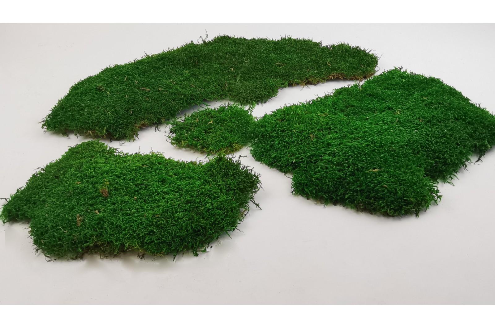Preserved flat moss green (PL) (3 kg)