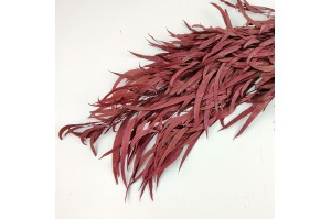 Preserved Eucalyptus nicoly red bordeaux