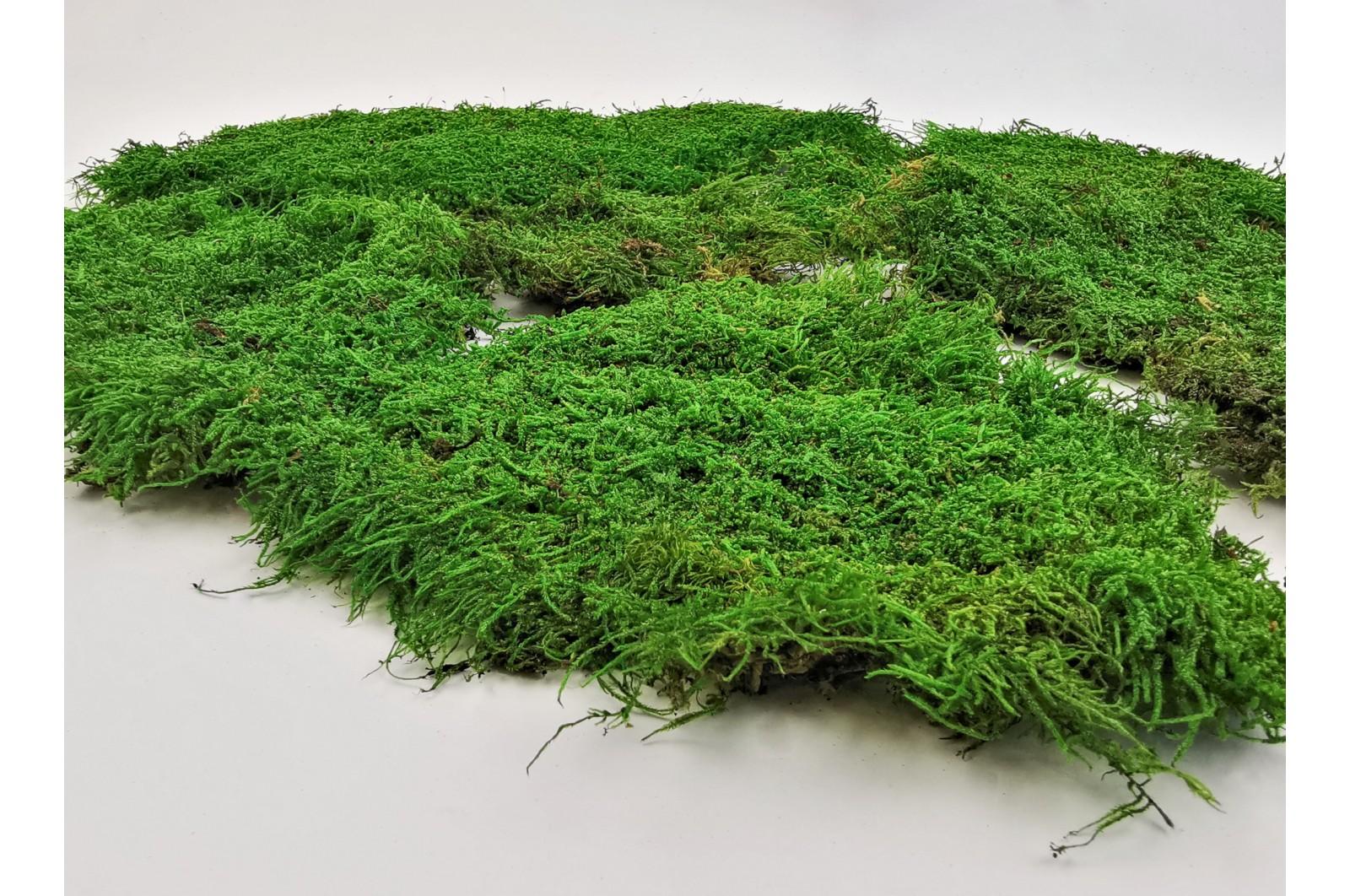 Stabilisiertes Flachmoos - grün 1 (2.5 kg)