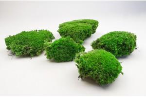 Preserved pole moss light green (1)