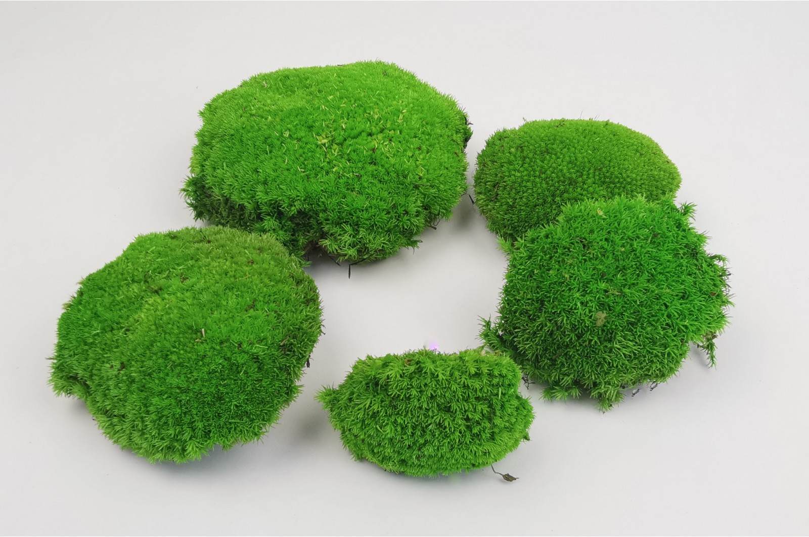 Preserved pole moss light green 2 bulk box