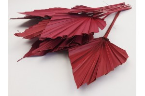 Dried palm spear red (NL)