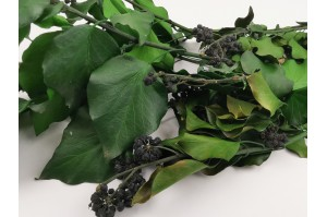 Preserved Ivy with fruits green (7)