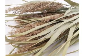 Dried Plumeau (grass) natural (7)