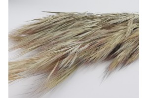Dried spikelet - natural (IT)