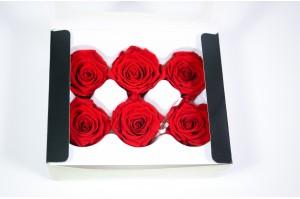 Preserved Rose heads XM (4-4.5 cm) intensiv red