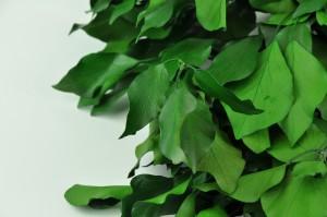 Preserved Ivy green (7)