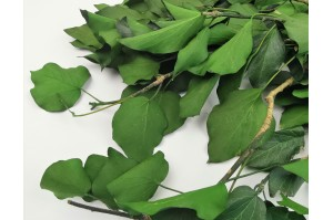 Preserved Ivy green (14)