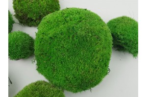 Preserved pole moss green (23)
