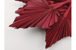 Dried palm spear red (7)