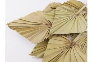 Dried palm spear nature (7)