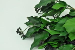 Lierre avec fruits stabilisé vert