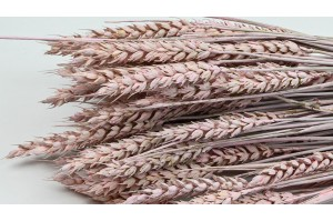 Dried wheat light pink - painted effect (8)
