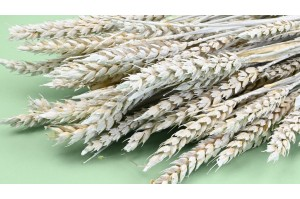 Dried wheat milky white - painted effect (8)