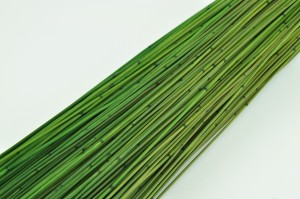 Mini bamboo green