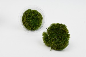 Preserved tricky green