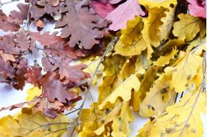 Preserved Oak automnal (IT)
