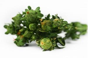 Preserved carthamus green (6)