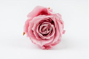 Preserved Rose heads XM (4-4.5 cm) light pink