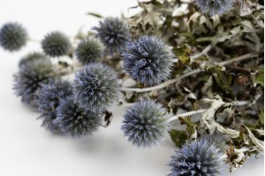 Dried thistle natural (NL)