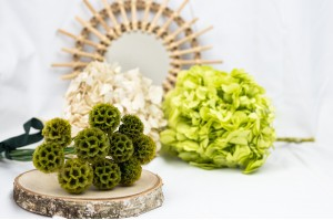 Preserved flowers - Wholesaler - Wholesale / Online Purchase