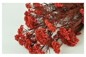 Floral fillers - Wholesaler - Wholesale / Online Purchase