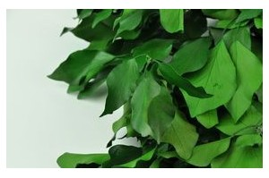 Other greeneries - Wholesaler - Wholesale / Online Purchase