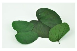Leaves - Wholesaler - Wholesale / Online Purchase