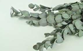 Eucalyptus stabilisés