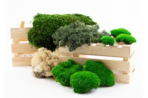 Mosses - Wholesaler - Wholesale / Online Purchase